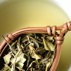 About white tea